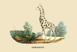 Giraffe by E.f. Noel