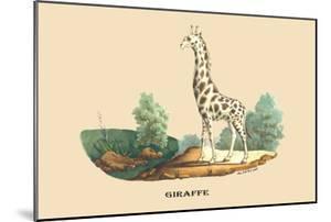 Giraffe by E^f^ Noel