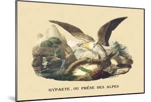 Gypaete, Ou Phene des Alpes by E.f. Noel