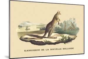 Kangouroo de la Nouvelle Hollande by E.f. Noel