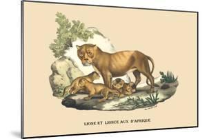 Lion et Lionne d'Afrique by E.f. Noel