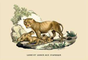 Lion et Lionne d'Afrique by E^f^ Noel