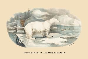 Ours Blanc de la Mer Glaciale by E.f. Noel