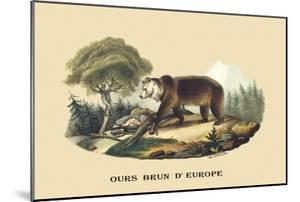 Ours Brun d'Europe by E.f. Noel