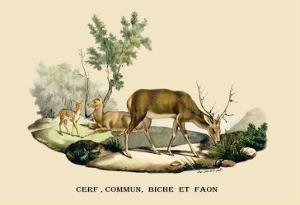 Stag, Doe and Fawn by E.f. Noel