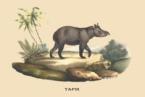 Tapir by E.f. Noel