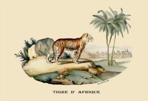 Tigre d'Afrique by E.f. Noel