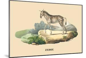 Zebre by E.f. Noel