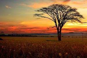 Tree Silhouette by E.Hanazaki Photography