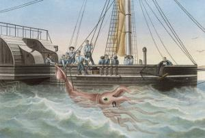 """Calmar de Bouyer Giant Squid Caught by the French Vessel """"Alecto"""" off Tenerife Canary Islands by E. Rodolphe"""