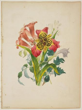 Bouquet of Trumpet Vine, from Flora's Dictionary, 1838