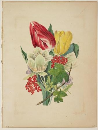Bouquet of Tulips, from Flora's Dictionary, 1838