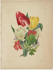 Bouquet of Tulips, from Flora's Dictionary, 1838 by E. W. Wirt