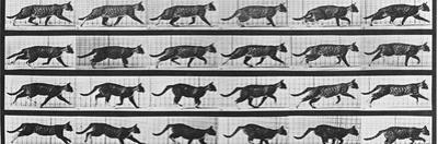 Album sur la décomposition du mouvement: Animal Locomotion: chat by Eadweard Muybridge