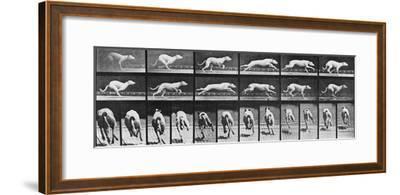 Album sur la décomposition du mouvement, Animal Locomotion: chien