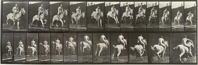 """Album sur la décompostion du mouvement : """"Animal locomotion  : saut d'ostacle, vu de face et de dos"""