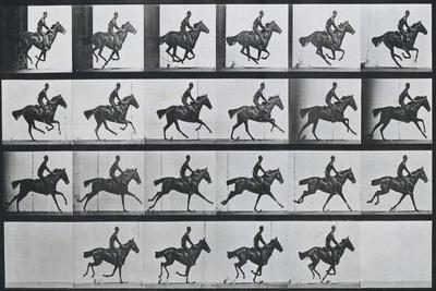 Bouquet, Galloping, Eadward Muybridge
