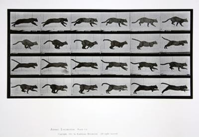 Cat Running, Plate 720 from 'Animal Locomotion', 1887