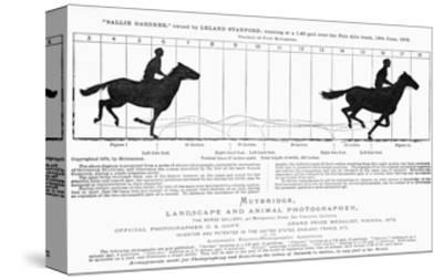 Diagram of a Horse in Motion