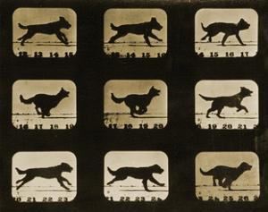Dogs Running, from the 'Animal Locomotion' Series, C.1881 by Eadweard Muybridge