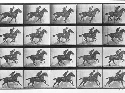 Galloping Horse, Plate 628 from Animal Locomotion, 1887