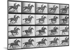 Galloping Horse, Plate 628 from Animal Locomotion, 1887 by Eadweard Muybridge