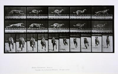 Greyhound Running, Plate 708 from 'Animal Locomotion', 1887
