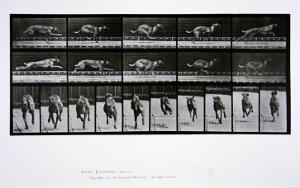 Greyhound Running, Plate 708 from 'Animal Locomotion', 1887 by Eadweard Muybridge