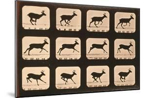 Image Sequence of a Deer Running, 'Animal Locomotion' Series, C.1881 by Eadweard Muybridge