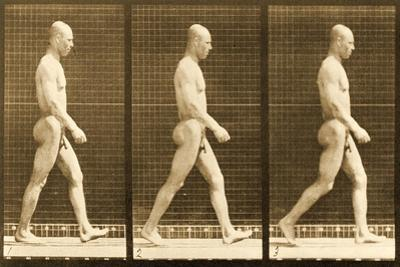 Image Sequence of a Nude Man Walking, 'Animal Locomotion' Series, C.1881