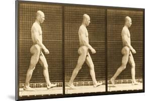 Image Sequence of a Nude Man Walking, 'Animal Locomotion' Series, C.1881 by Eadweard Muybridge