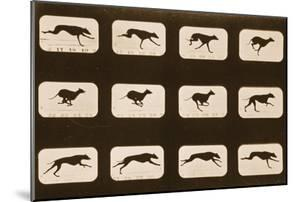 Image Sequence of Running Greyhounds, 'Animal Locomotion' Series, C.1881 by Eadweard Muybridge