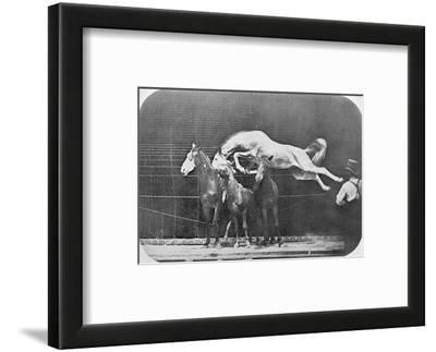 Jumping over Three Horses...Chestnut Horse Hornet