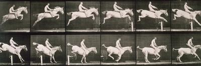 Man and horse jumping a fence, plate 643 from 'Animal Locomotion', 1887