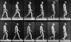 Man Walking, from 'Animal Locomotion', 1887 (B/W Photo) by Eadweard Muybridge