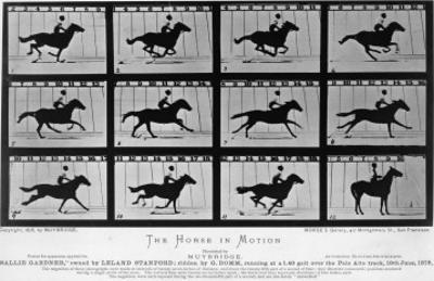 Movements of a Galloping Horse