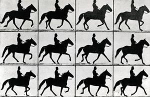 One Stride in Eleven Phases, 1881, Illustration from 'Animals in Motion' by Eadweard Muybridge,… by Eadweard Muybridge