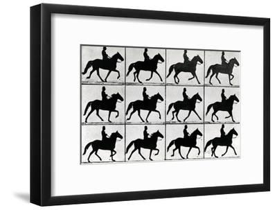 One Stride in Eleven Phases, 1881, Illustration from 'Animals in Motion' by Eadweard Muybridge,…