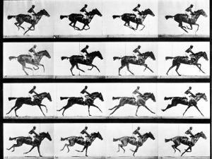 Photographer Eadweard Muybridge's Study of a Horse at Full Gallop in Collotype Print by Eadweard Muybridge