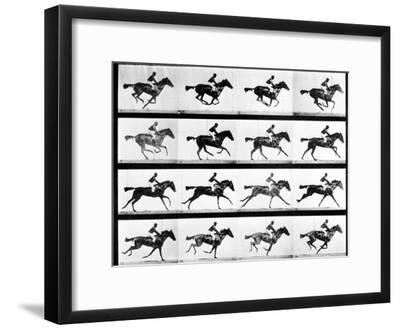 Photographer Eadweard Muybridge's Study of a Horse at Full Gallop in Collotype Print