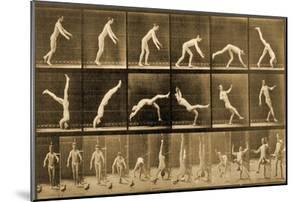 Plate from 'Animal Locomotion' Series, C.1887 by Eadweard Muybridge