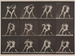 Plate Number 340. Boxing; open hand , 1887 by Eadweard Muybridge