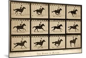 The Horse in Motion, 'Animal Locomotion' Series, C.1878 by Eadweard Muybridge