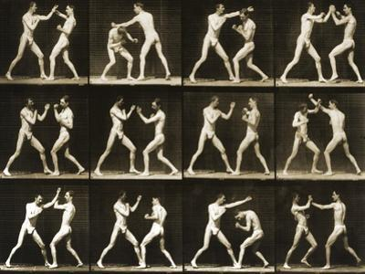 Two Men Boxing, from the 'Animal Locomotion; Series, C.1881