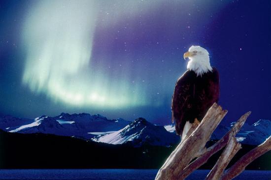 eagle-and-aurora-borealis