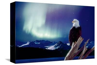 Eagle and Aurora Borealis--Stretched Canvas Print