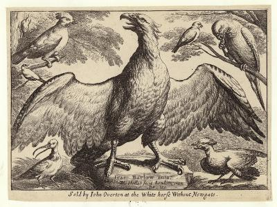 Eagle and Other Birds-Wenceslaus Hollar-Giclee Print