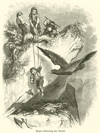 Eagle Defending Her Brood--Giclee Print