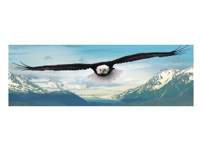 Eagle flying over Mountains--Art Print