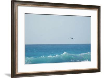 Eagle Flying over Sea-Fabian Jurado's Photography.-Framed Photographic Print